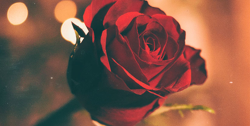 Valentine's rose | Readable, free readability test
